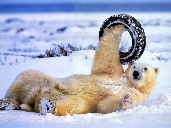 polar-bear-tyre